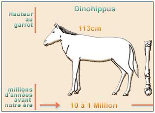 equus3