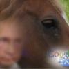 Les « petits chevaux tristes » de Google