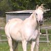 Le cheval en hiver